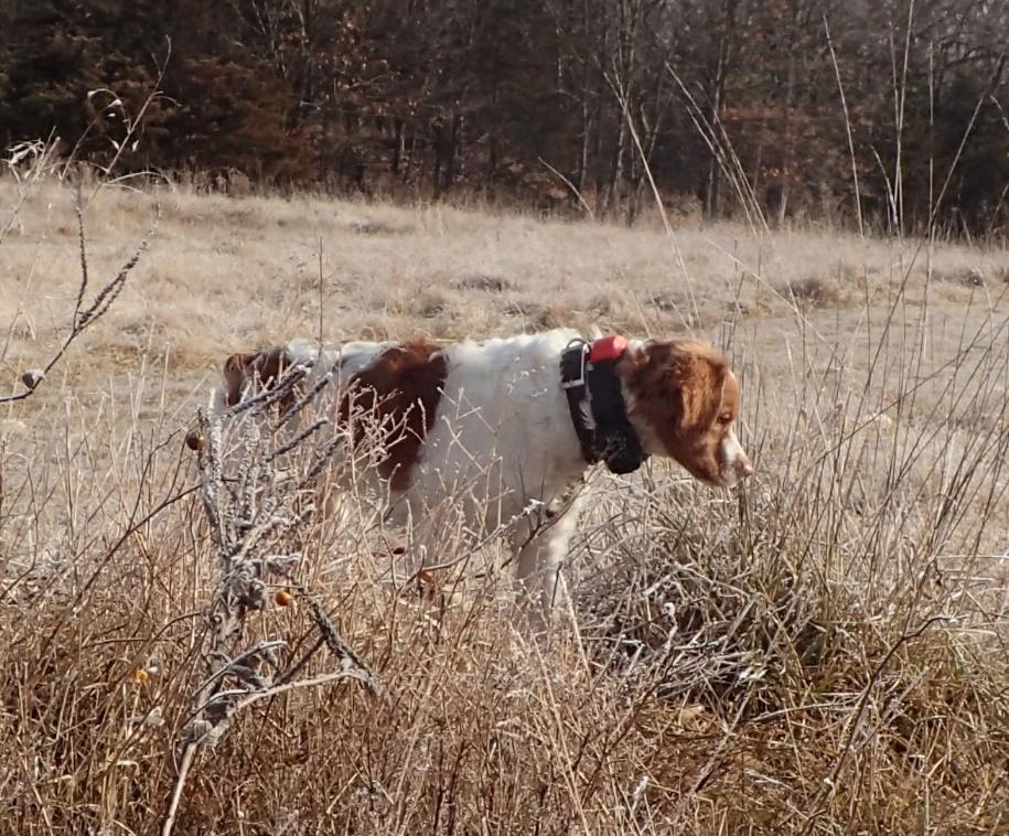 Rye in the field